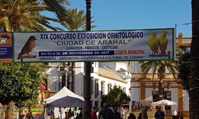 AionSur 20171112_112257-1-400x240 Arahal, sede de la afición andaluza a la ornitología durante el mes de noviembre Arahal