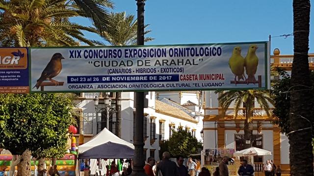 AionSur 20171112_112257-1 Arahal, sede de la afición andaluza a la ornitología durante el mes de noviembre Arahal