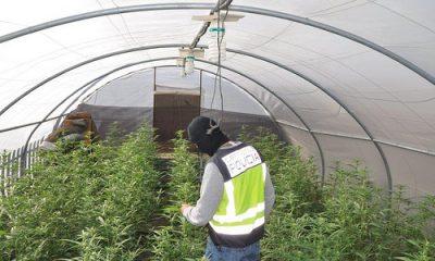 AionSur 38579054491_8f771c75cb-400x240 Detenidas seis personas dedicadas al cultivo a gran escala de marihuana Dos Hermanas Provincia