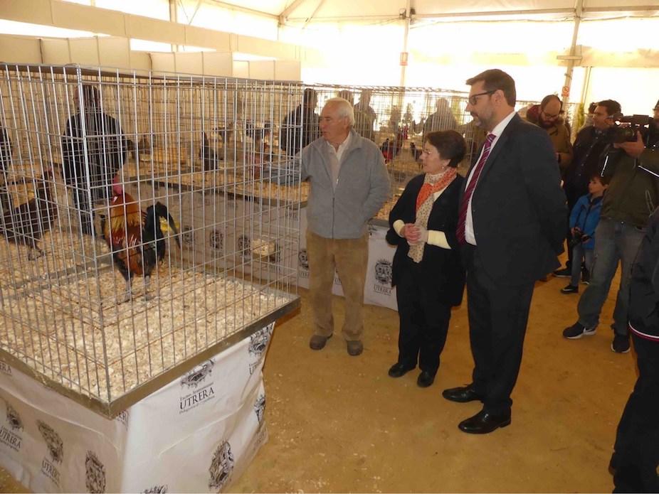 AionSur gallinas-feria Recuperan una variedad de gallina casi perdida, que se expone en la feria de Utrera Utrera