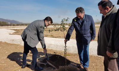 AionSur: Noticias de Sevilla, sus Comarcas y Andalucía 20180209_113511-400x240 Los olivos del mundo se dan cita en La Roda La Roda de Andalucía