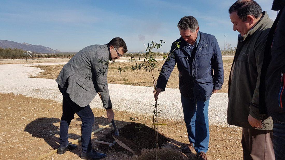 AionSur: Noticias de Sevilla, sus Comarcas y Andalucía 20180209_113511 Los olivos del mundo se dan cita en La Roda La Roda de Andalucía