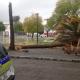 AionSur arbol-80x80 Más de 150 incidencias por el temporal en Andalucía Sucesos