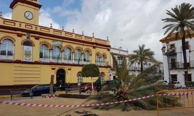 AionSur 20180305_123830-400x240 Una palmera centenaria La Corredera, sacrificada por riesgo de caída Arahal
