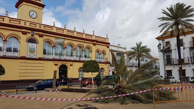 AionSur 20180305_123830 Una palmera centenaria La Corredera, sacrificada por riesgo de caída Arahal