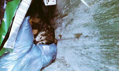AionSur DYO-Jm9X4AEe7gN-400x240 Contenedores de basura: última morada de los perros abandonados en El Saucejo El Saucejo
