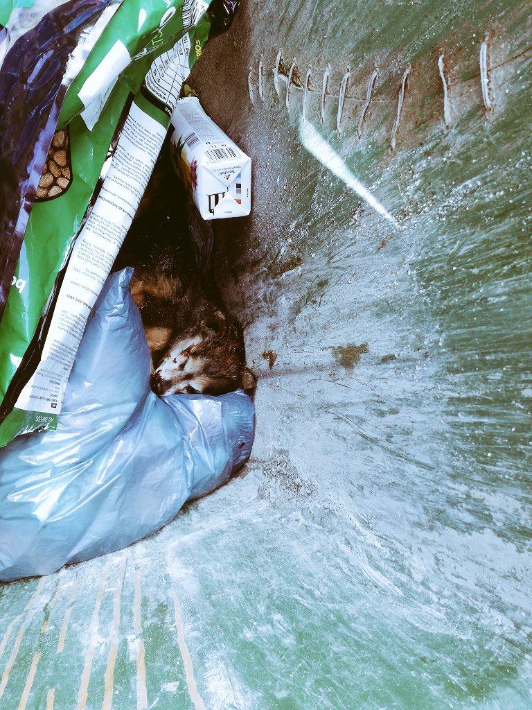 AionSur DYO-Jm9X4AEe7gN Contenedores de basura: última morada de los perros abandonados en El Saucejo El Saucejo