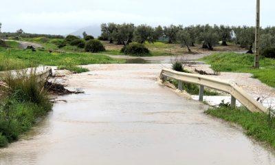 AionSur IMG_2663-400x240 19 días de lluvias que dan esperanza al campo Arahal Medio Ambiente