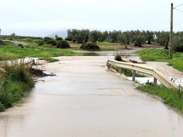 AionSur IMG_2663 19 días de lluvias que dan esperanza al campo Arahal Medio Ambiente