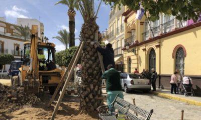 AionSur IMG_E2420-400x240 Repuesta la palmera talada por riesgo de caída en la Plaza de la Corredera de Arahal Arahal
