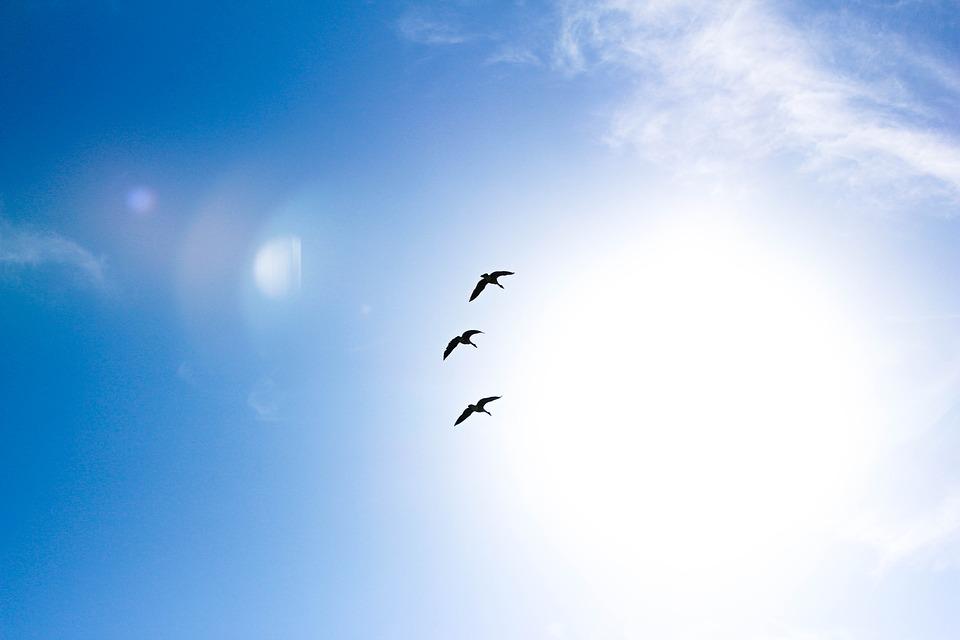 AionSur animals-1869232_960_720 Siguen el frío y los cielos despejados Sociedad