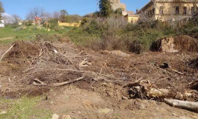 "AionSur arboles-400x240 Denuncian un ""arboricidio"" en un campo de Alcalá de Guadaíra Alcalá de Guadaíra"