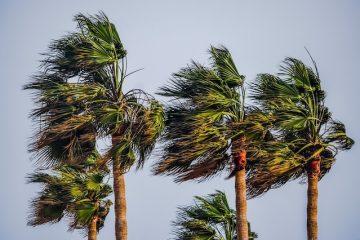 AionSur viento-360x240 La borrasca, en su apogeo Sociedad