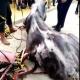 AionSur caballo-feria-80x80 Muere un caballo en la Feria de Abril después de no comer ni beber en todo el día Sucesos