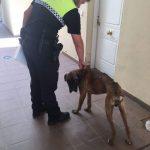 APADEVI pide que se considere maltrato, no solo abandono, la denuncia del perro de Castilleja