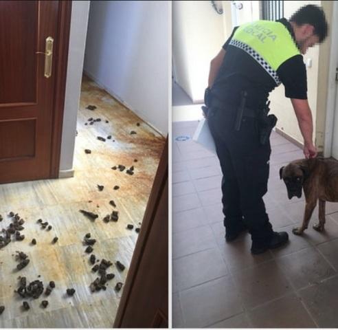 AionSur Sin-título El milagro de un perro en Castilleja que sobrevivió tras estar cuatro meses encerrado en un piso Sucesos