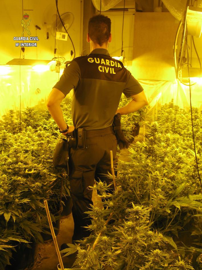 AionSur Mariahuana-viso Descubren una plantación de marihuana cuando investigaban un posible robo Sucesos