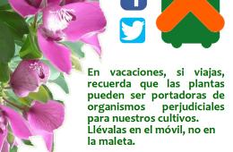 AionSur campaña-junta-2018-260x170 Campaña de la Junta para concienciar del riesgo de traer material vegetal de otros países Andalucía