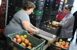 AionSur hortalizas-Arahal-huerta-260x170 Andalucía ha exportado frutas y hortalizas por un importe superior a los 3.000 millones de euros entre enero y mayo Andalucía