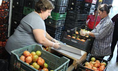 AionSur hortalizas-Arahal-huerta-400x240 Sevilla, segunda provincia andaluza con la mejor balanza comercial en lo que va de año Economía Sevilla