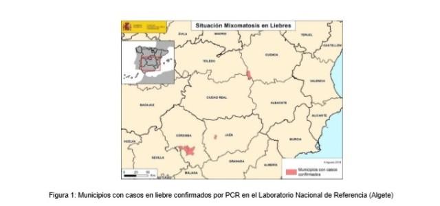 AionSur informe El Ministerio activa los protocolos para hacer frente a la mixomatosis en las liebres Agricultura Andalucía