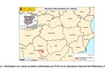 AionSur liebres-mixomatosis-360x240 Medio Ambiente confirma que la mixomatosis ha llegado a la provincia de Sevilla Campo Medio Ambiente