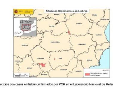 AionSur liebres-mixomatosis-378x300 Medio Ambiente confirma que la mixomatosis ha llegado a la provincia de Sevilla Campo Medio Ambiente