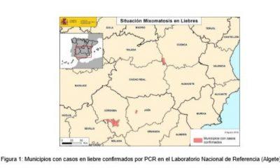AionSur liebres-mixomatosis-400x240 Medio Ambiente confirma que la mixomatosis ha llegado a la provincia de Sevilla Medio Ambiente Naturaleza