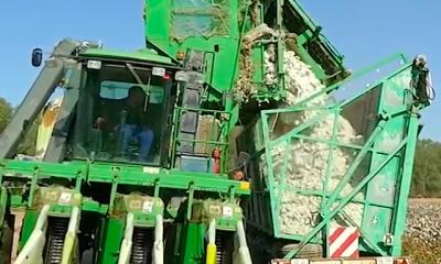 AionSur Algodon-400x240 Sevilla vuelve a liderar la producción nacional de algodón, con 40.000 hectáreas Agricultura
