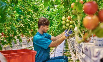 AionSur Empleo28-agricultor-joven-400x240 Agricultura destina 30 millones de euros a ayudas a jóvenes agricultores Agricultura