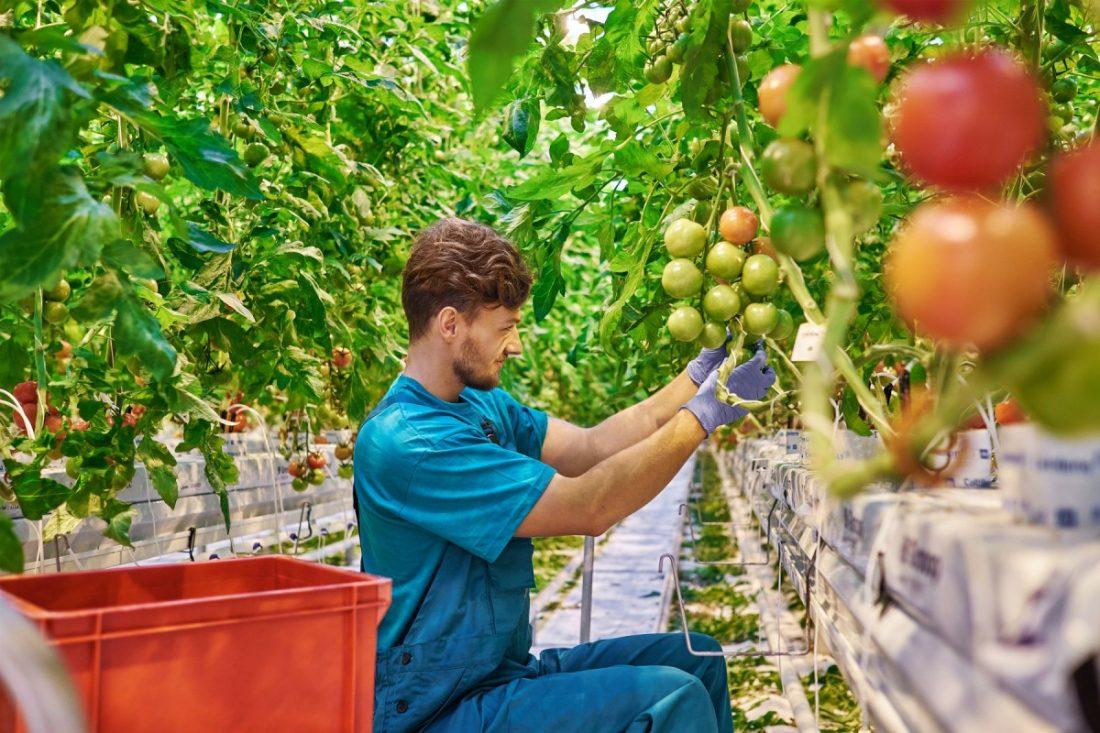 AionSur Empleo28-agricultor-joven Agricultura destina 30 millones de euros a ayudas a jóvenes agricultores Agricultura
