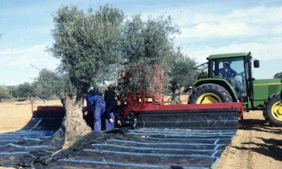 AionSur Verdeo-compressor-400x240 CCOO recuerda que la campaña del verdeo debe incluir subidas salariales Agricultura