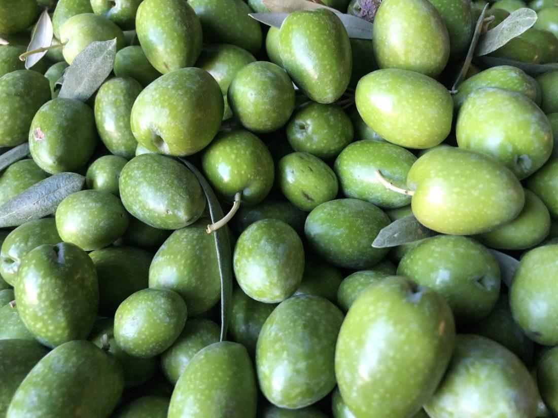 """AionSur aceitunas-COAG-verdeo La UPA pide disculpa a los agricultores de Arahal por las """"desafortunadas declaraciones"""" al no asistir a la tractorada Agricultura destacado"""