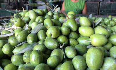 AionSur verdeo-Arahal-2018-400x240 Arahal comienza la campaña de verdeo 2018 con calor e incertidumbre en los precios Agricultura  destacado