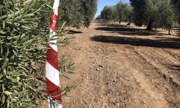 AionSur accidente-avión-Arahal-590x354 Un agricultor de Arahal reclamará a Defensa los daños provocados por los depósitos de combustible Arahal  destacado