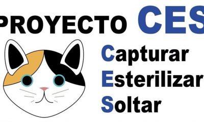 AionSur gatos-400x240 Campaña en Alcalá de Guadaíra para capturar y estirilizar los gatos de la ciudad Alcalá de Guadaíra Provincia