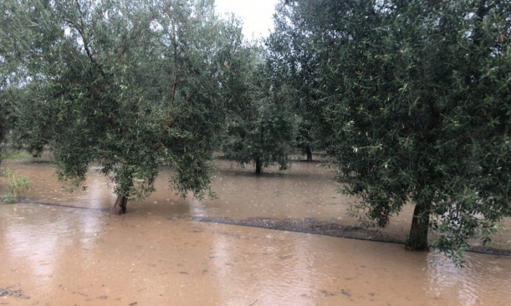 AionSur inundaciones-campo-Arahal-1000x600 COAG pide que la administraciones estudien ayudas después de las inundaciones Asociaciones Sociedad