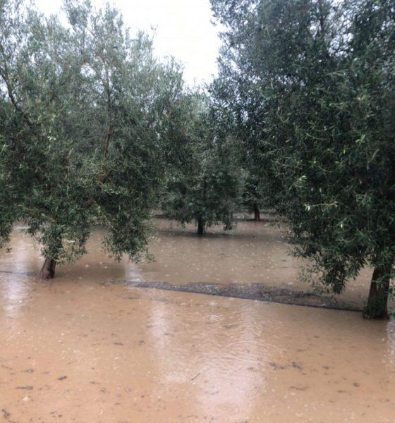 AionSur inundaciones-campo-Arahal-560x600 COAG pide que la administraciones estudien ayudas después de las inundaciones Asociaciones Sociedad