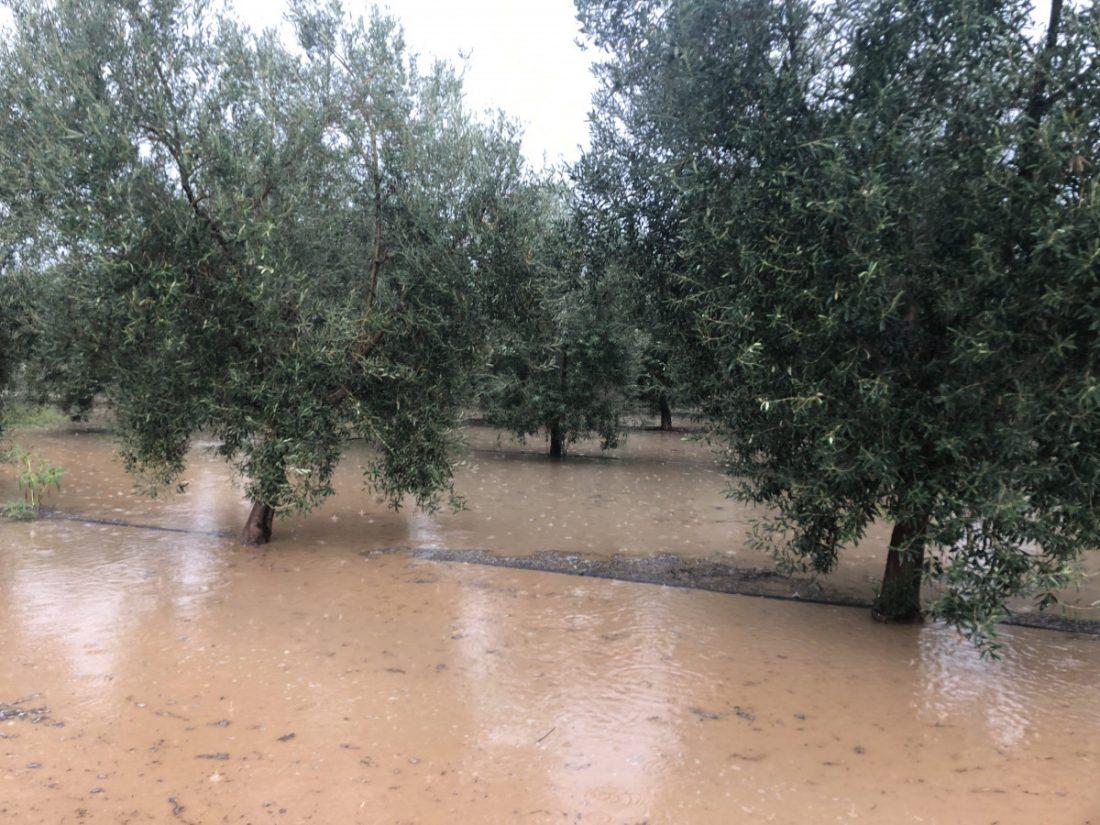 AionSur inundaciones-campo-Arahal COAG pide que la administraciones estudien ayudas después de las inundaciones Asociaciones Sociedad