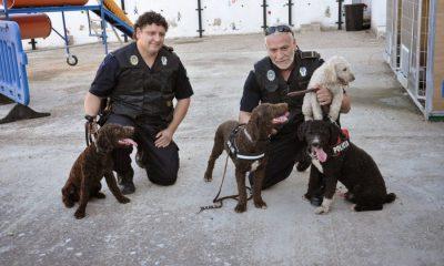 AionSur Leo-Unidad-Canina-Arahal-400x240 El exjefe de la Policía Local de Arahal, obligado a devolver a Leo, el perro de la USE Arahal  destacado