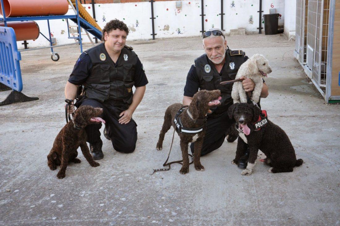 AionSur: Noticias de Sevilla, sus Comarcas y Andalucía Leo-Unidad-Canina-Arahal El exjefe de la Policía Local de Arahal, obligado a devolver a Leo, el perro de la USE Arahal destacado