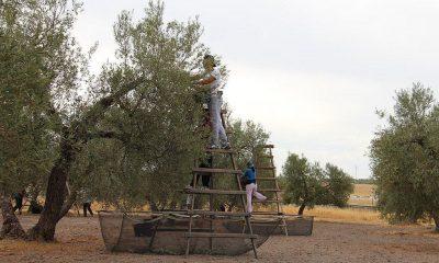 AionSur campo-convenio-400x240 Publicado en el BOP el nuevo convenio de trabajadores del campo Agricultura  destacado