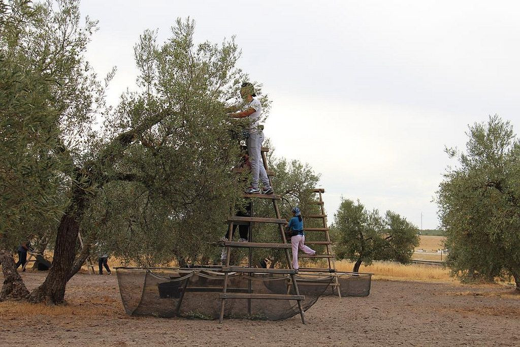 AionSur campo-convenio Publicado en el BOP el nuevo convenio de trabajadores del campo Agricultura  destacado
