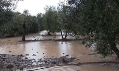 AionSur lluvia-400x240 El BOJA hace oficial las ayudas a pueblos afectados por inundaciones en sus campos Sucesos