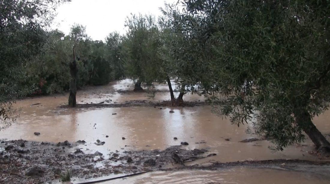 AionSur lluvia El BOJA hace oficial las ayudas a pueblos afectados por inundaciones en sus campos Sucesos