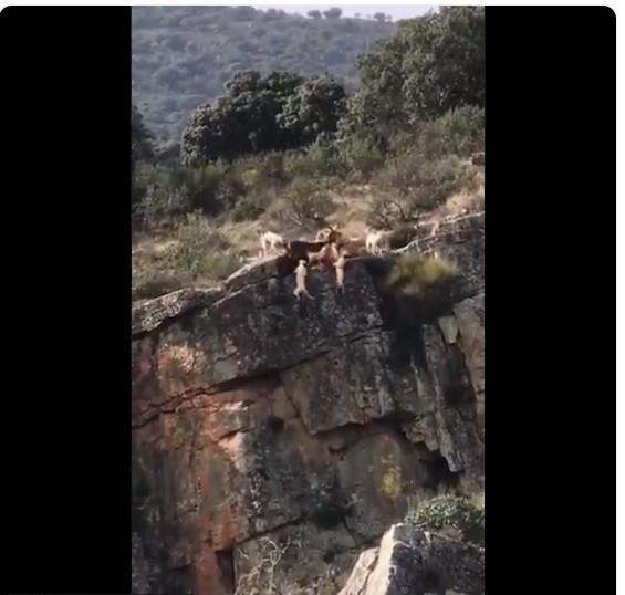 AionSur perro-caza-videoviral Un vídeo de 10 perros despeñándose por un barranco en una cacería se hace viral Animales