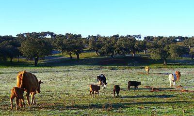 AionSur Dehesa-400x240 En marcha un programa para proteger la dehesa al norte de Sevilla y Extremadura Agricultura Naturaleza