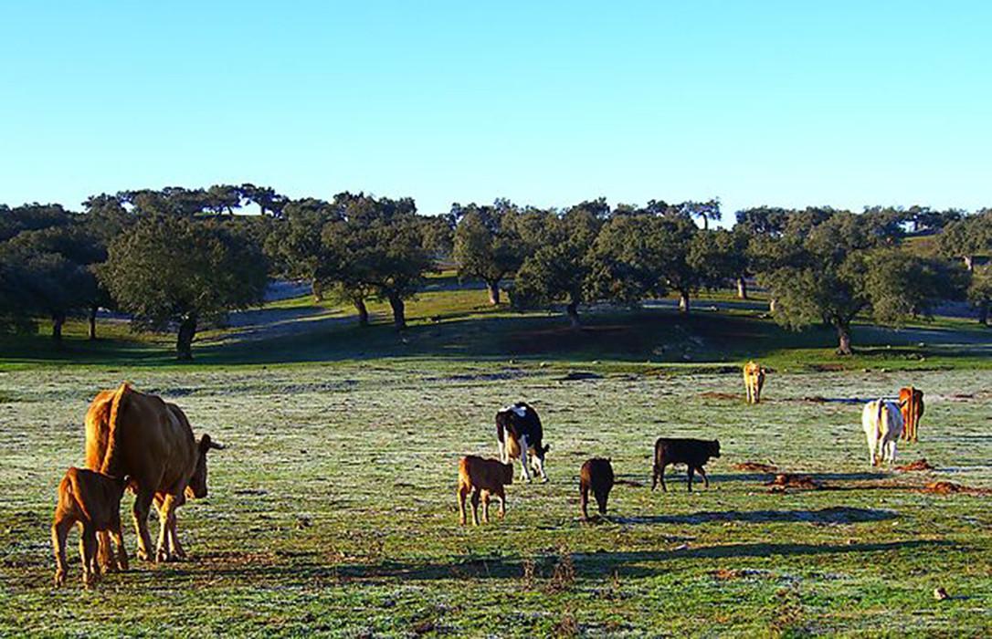 AionSur Dehesa En marcha un programa para proteger la dehesa al norte de Sevilla y Extremadura Agricultura Naturaleza
