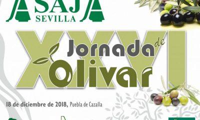 AionSur Jornada-Olivar-ASAJA-Sevilla-400x240 La situación del olivar sevillano, a debate en unas jornadas organizadas por ASAJA Agricultura Economía