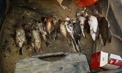 AionSur aves-400x240 Investigado por alentar a su hijo menor de edad a matar especies protegidas de aves Sucesos  destacado